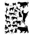 dogs animal detail silhouette vector image