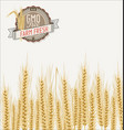 field wheat background vector image