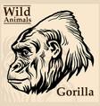 gorilla head graphic vector image vector image