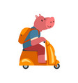 pig with backpack riding scooter funny animal vector image