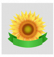 sunflowers with green ribbon transparent vector image vector image