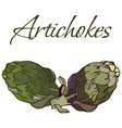 tasty veggies artichokes vector image vector image