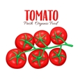branch tomatoes vector image