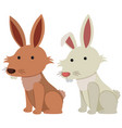 brown and white bunnies on white background vector image
