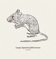 the large japanese field mouse apodemus vector image