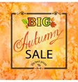 Autumn Sale Orange square background vector image vector image