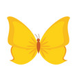 beautiful buttefly isolated vector image