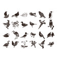 bird collection cartoon clipart vector image