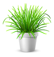 green grass in white flowerpot vector image vector image