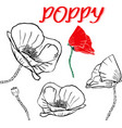 hand drawn contour of poppy flowers vector image vector image