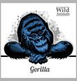 peeking gorilla - color vector image vector image