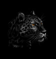 portrait a leopard head on a black background vector image vector image