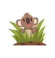 sweet koala bear sitting among grass vector image vector image