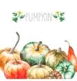Watercolor pumpkin vector image vector image