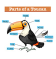 Diagram showing parts of toucan vector image