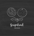 grapefruit fruit drawing sketch grapefruits vector image vector image