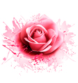 Greeting card with pink rose vector image vector image