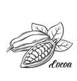 hand drawn cocoa bean vector image vector image