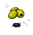 pitted olive hand drawn vector image vector image