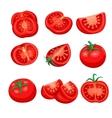 tomato sliced set vector image vector image