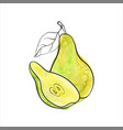 green pear vector image