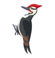 cartoon smiling woodpecker vector image vector image