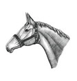 horse head hand draw vintage engraving style vector image