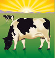 cows at sunrise vector image vector image