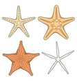 set of graphic color images of starfish vector image