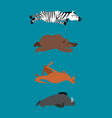 sleeping animals set 2 zebra and bear walrus and vector image