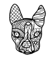 Boston Terrier or French Bulldog Coloring Page vector image