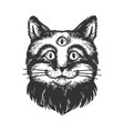 cat with three eyes engraving vector image