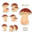 Edible mushroom porcini vector image vector image