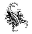 graphic scorpion aggressive astrological insect vector image vector image