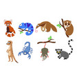 set of 8 exotic animals in a cartoon style vector image