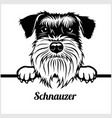 weimaraner - peeking dogs - - breed face head vector image vector image