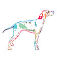 colorful decorative standing portrait of pointer vector image vector image