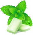 chewing gum with fresh mint leaves vector image