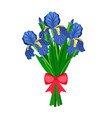 bouquet blue irises vector image