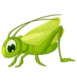 cute grasshopper cartoon vector image vector image