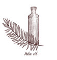 drawing palm oil vector image