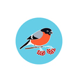 Icon Colorful Bullfinch vector image vector image
