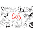 card with playing cats different breeds cat in vector image vector image
