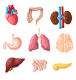 cartoon human internal organs set vector image vector image