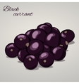 Cartoon sweet black currant on grey background vector image