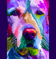 colorful close up golden retriever dog on pop art vector image vector image