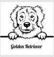 golden retriever - peeking dogs - - breed face vector image vector image