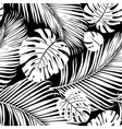 strelitzia palm pattern vector image vector image