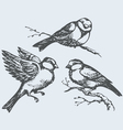 Tits sparrows and bullfinches on branch vector image vector image