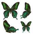 Set of realistic green butterfly vector image